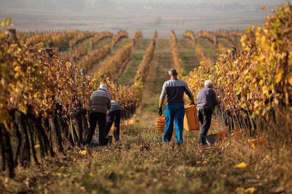 ¿Sabes cuál es el vino más caro del mundo?