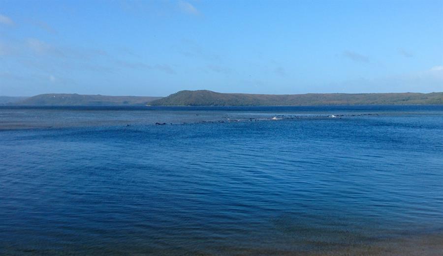 Descubren unas 275 ballenas varadas en una zona remota del sur de Australia