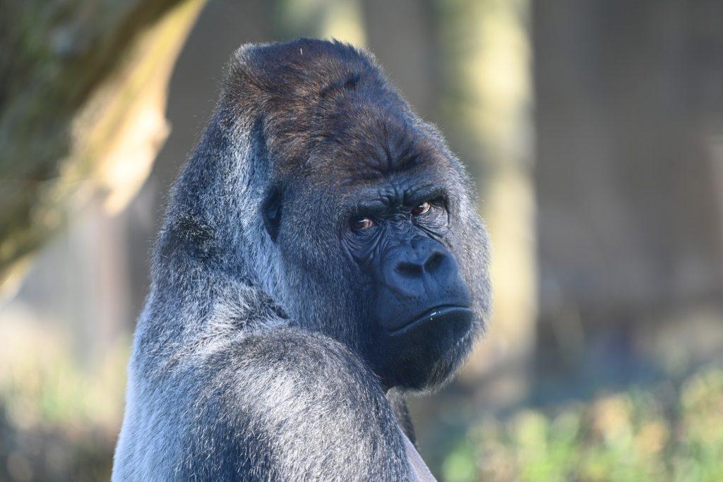 La sexta extinción masiva de especies está más cerca de lo que imaginas