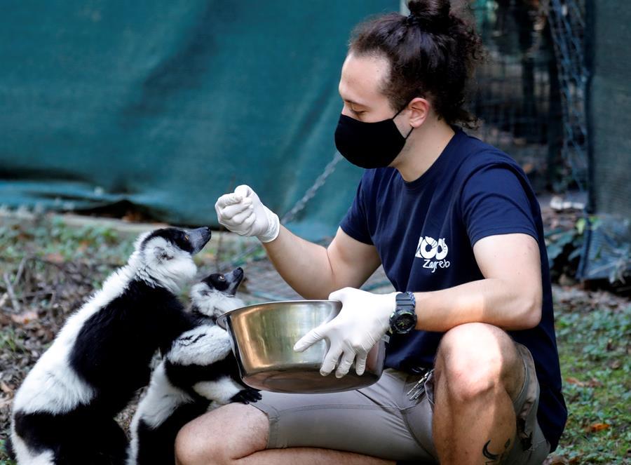 Dos crías de lemur rufo se convierten en la sensación del zoo de Zagreb