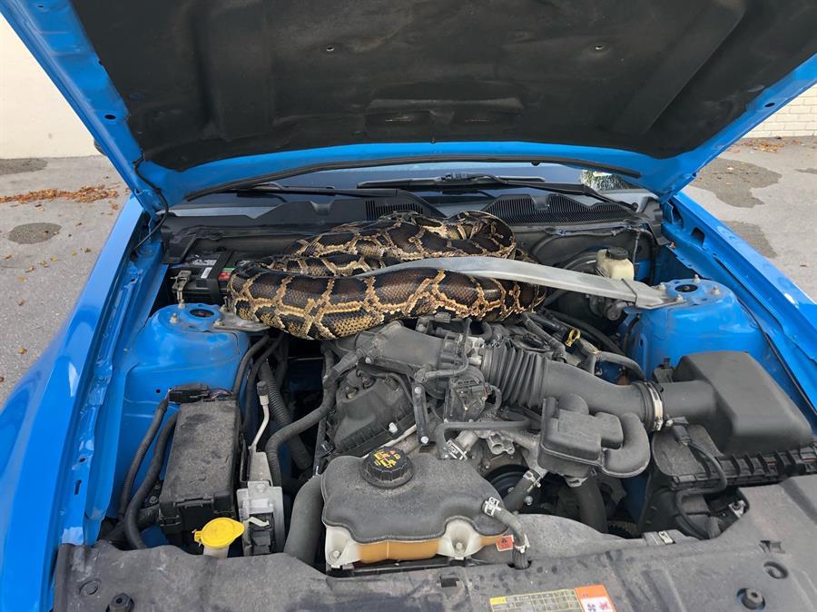 Ningún mecánico podía reparar lo que este hombre encontró bajo el capó de su carro