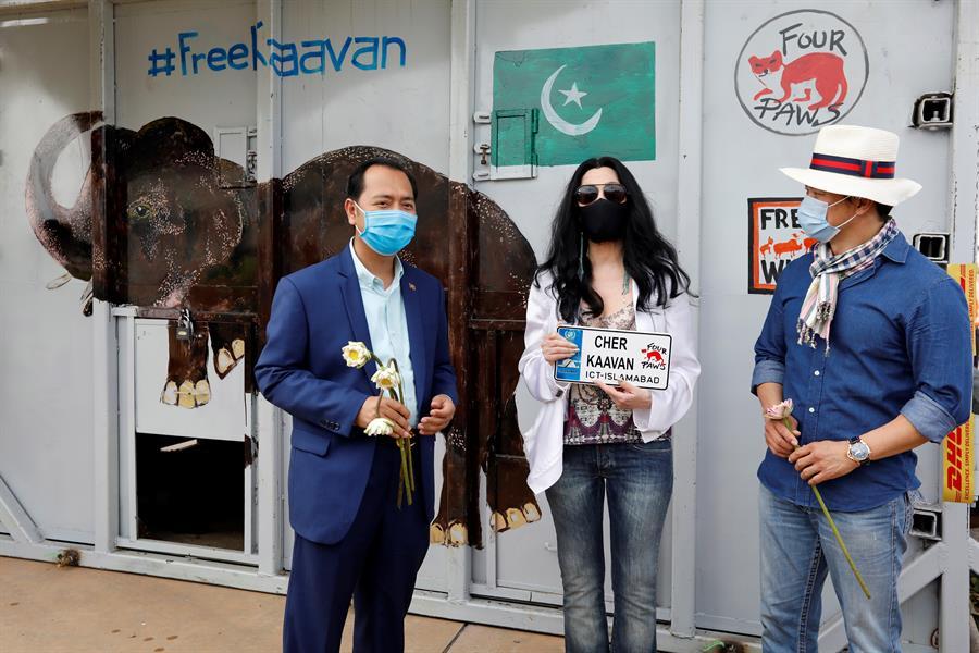 El elefante Kaavan llegó a su nueva casa en Camboya y fue recibido en el aeropuerto por Cher